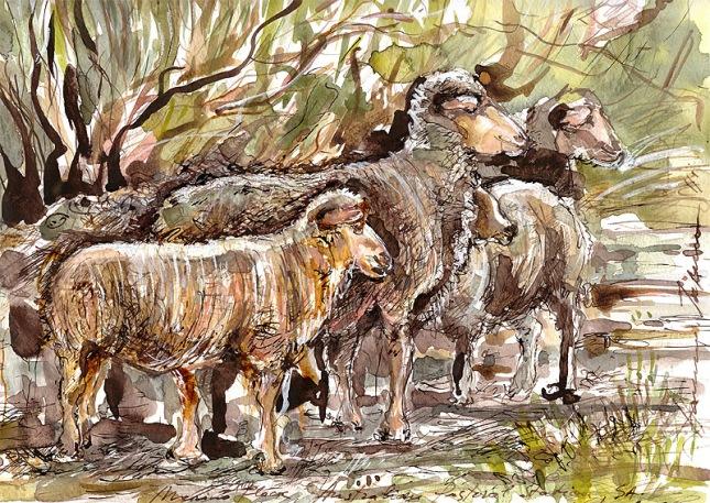 Australian Pastoral Station,Merino flock